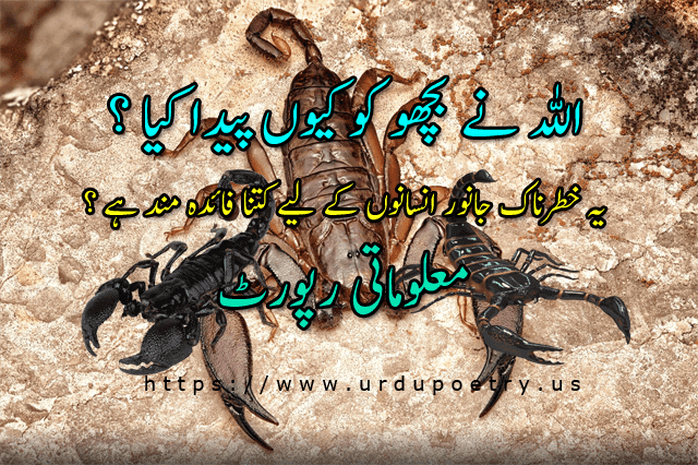 scorpio-urdu